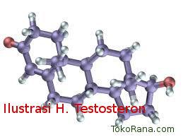 Pentingnya hormon Testosteron Pria untuk kesehatan Tubuh